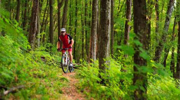Great cycling holidays and tours in italy by terra bici - Mtb bagno di romagna ...